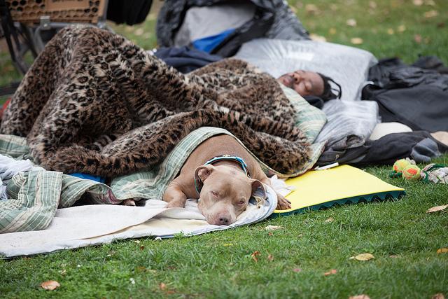 homelessmandog.jpg